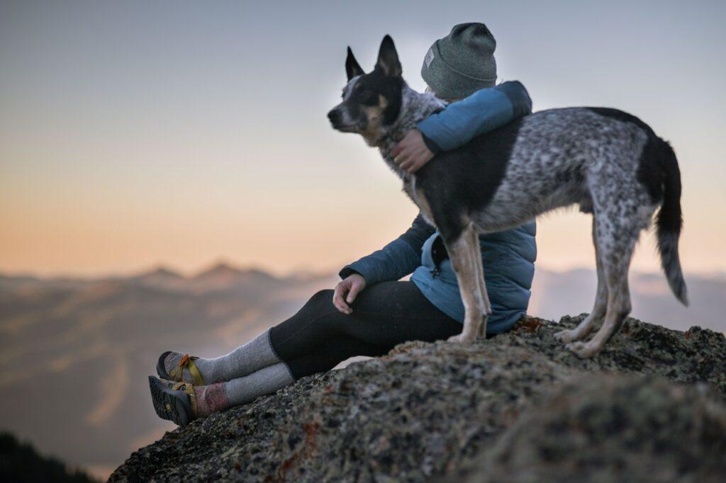 Człowiek i pies w górach. Zwierzęta w animal studies